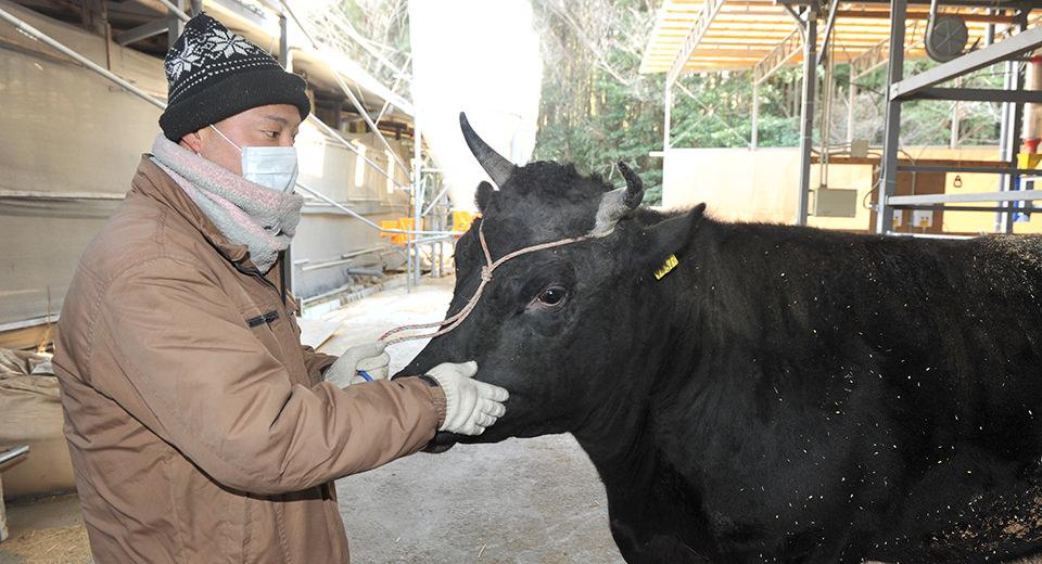 優良血統書付きA5ランクの牛