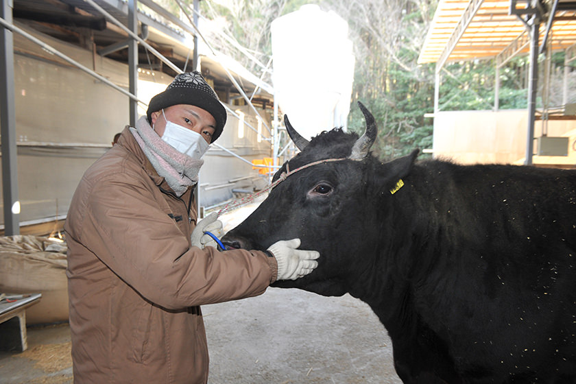 牛の体調を診る